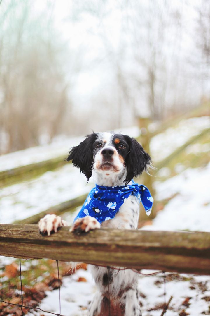 Bandana dog pet winter