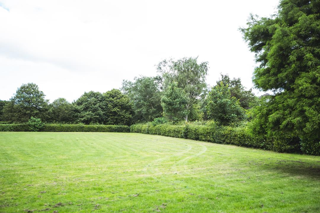 Hedge and trees in green garden, backgrounds