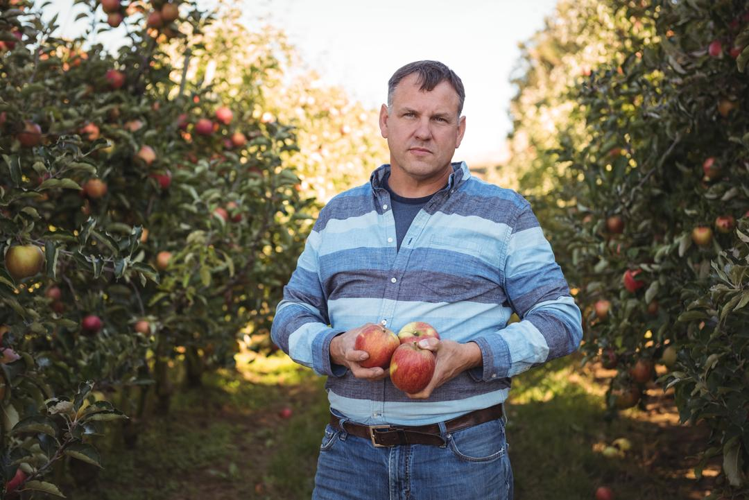 Portrait of farmer holding apples in apple orchard on a sunny day Free Stock Images from PikWizard