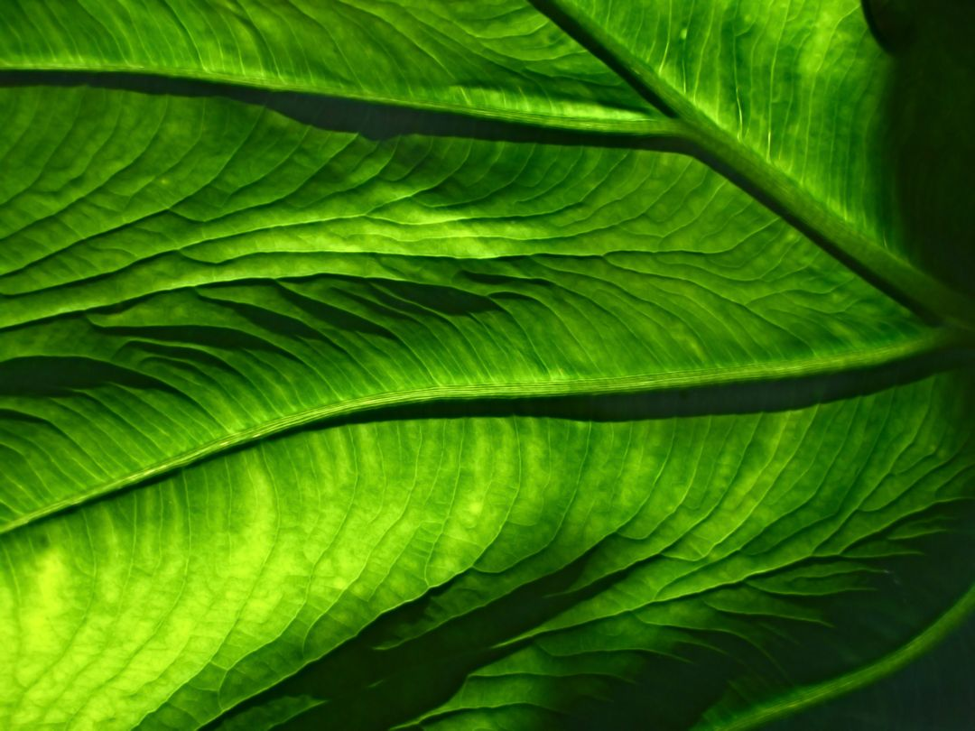 close up image of a green leaf background