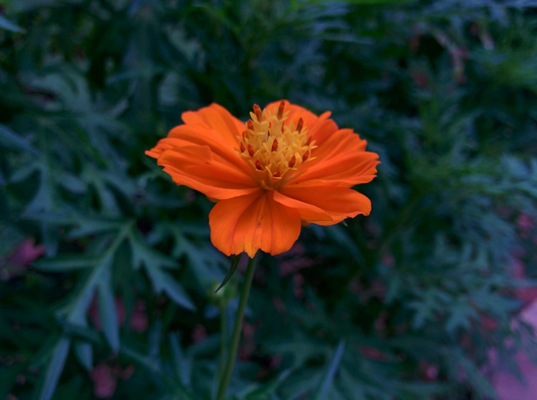 Orange Flower Ornamental