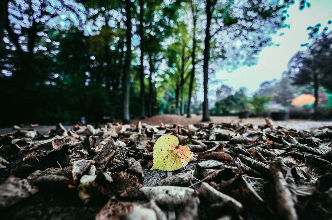 Selective Color Photo of Yellow Leaf Free Stock Images from PikWizard