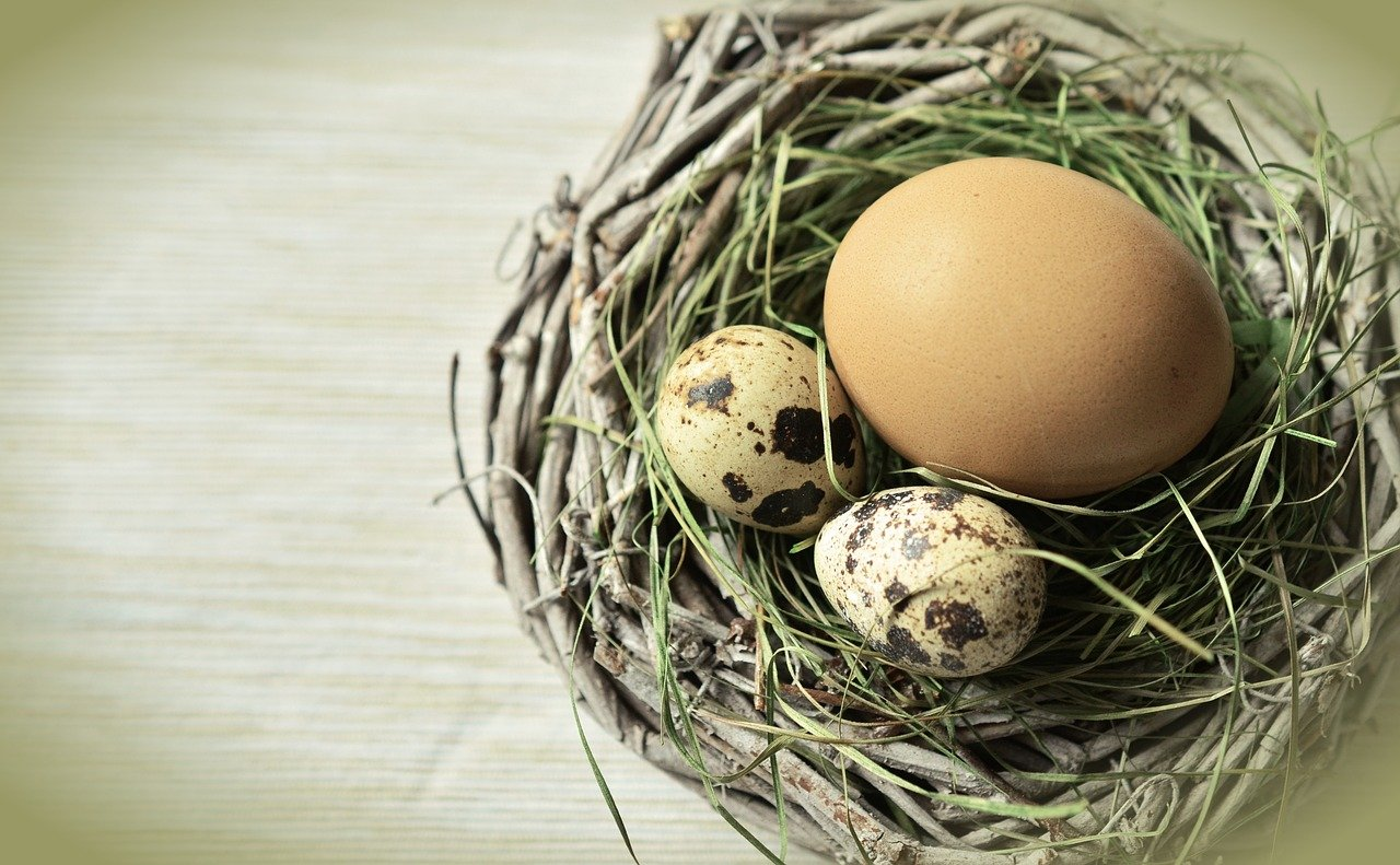 FREE egg Stock Photos from PikWizard