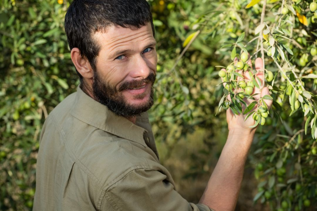 Portrait of farmer checking a tree of olive in farm Free Stock Images from PikWizard