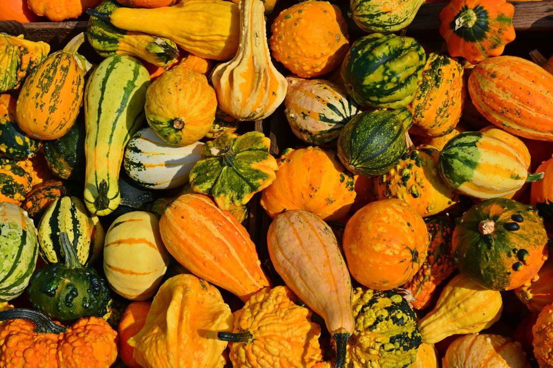 Photo of a pile of orange and green pumpkins and squashes