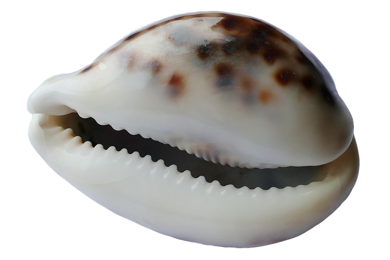 FREE mollusk Stock Photos from PikWizard