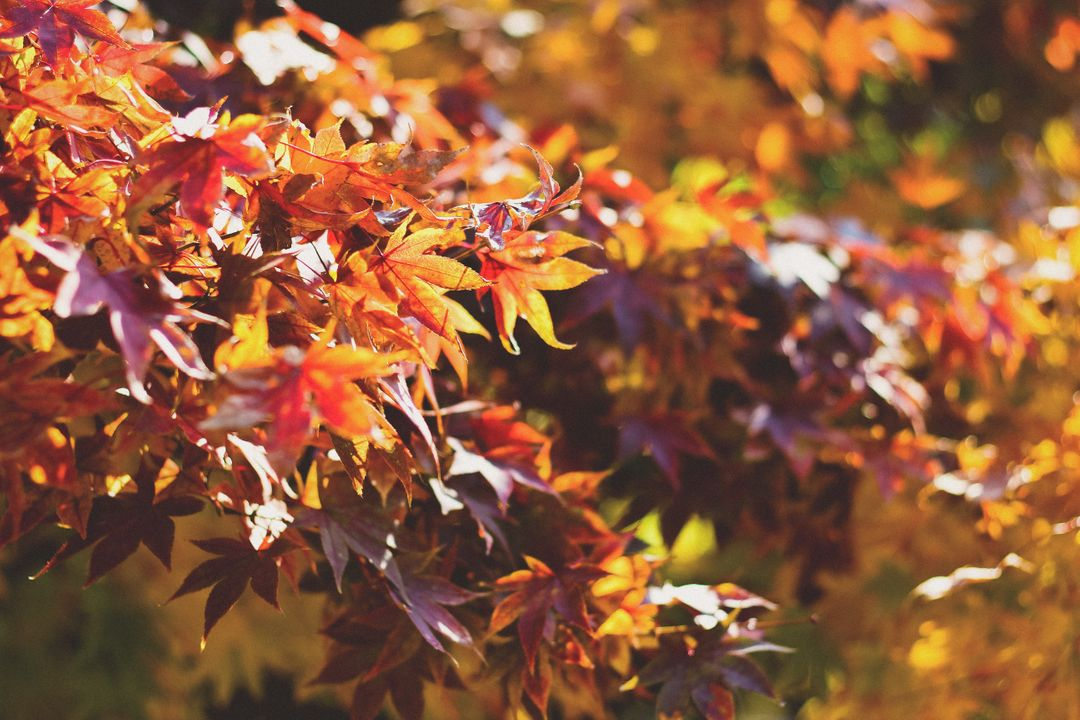 Image of a tree with brown and orange autumn leaves