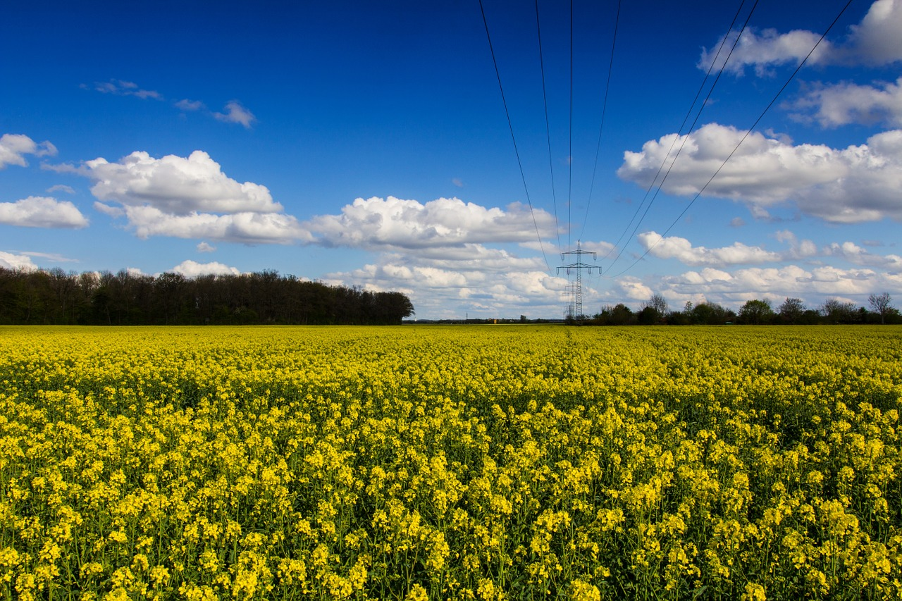 FREE oilseed Stock Photos from PikWizard