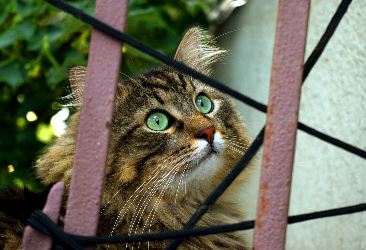 FREE feline Stock Photos from PikWizard