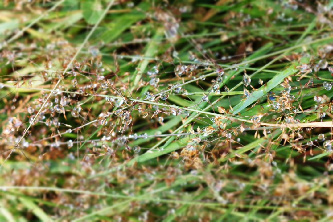 Grass dew outdoors close up