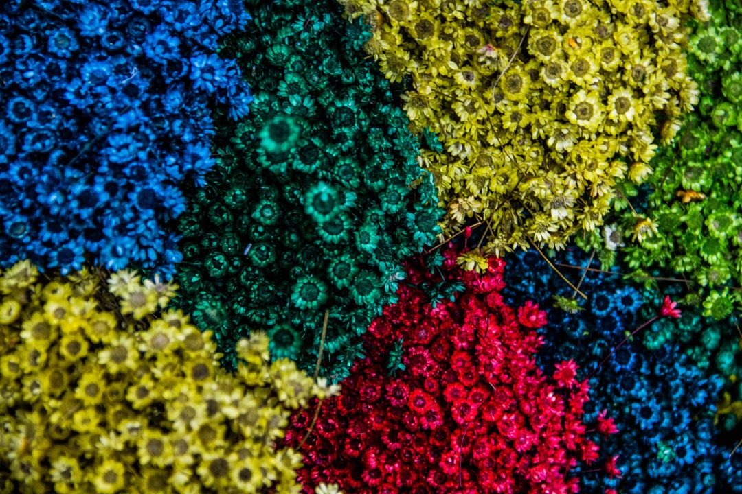 Colors colours flowers