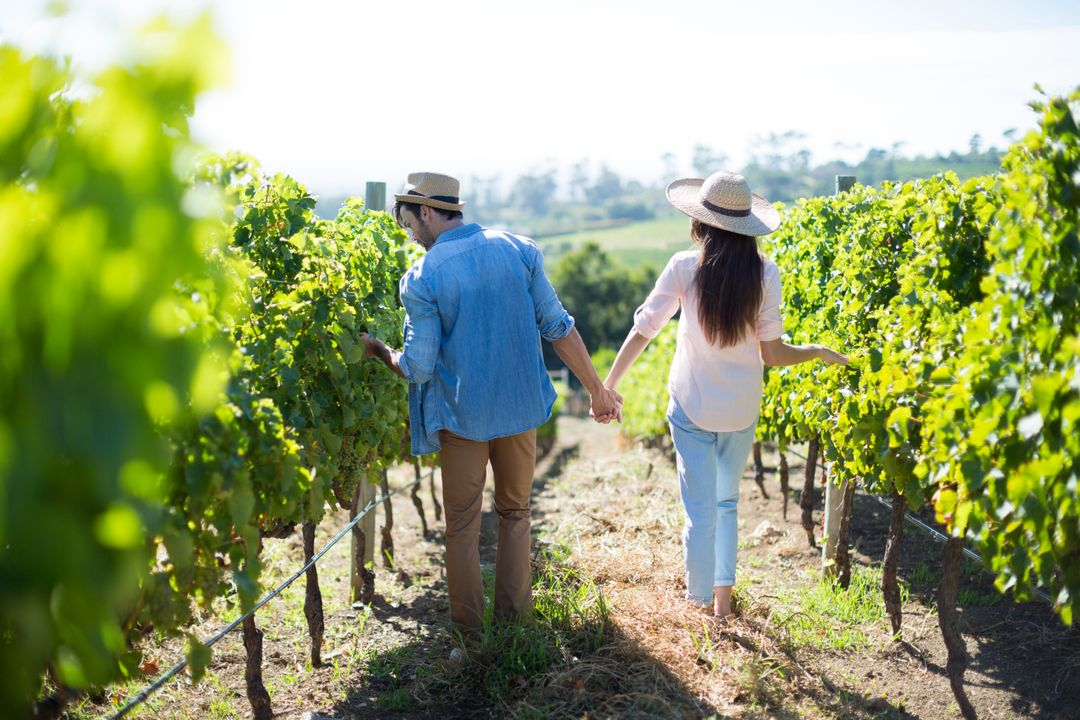 Rear view of couple holding hands while walking at vineyard Free Stock Images from PikWizard
