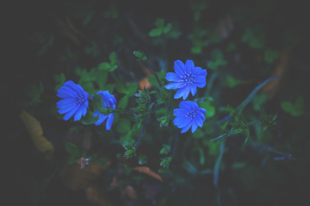 Background bloom blossom blue