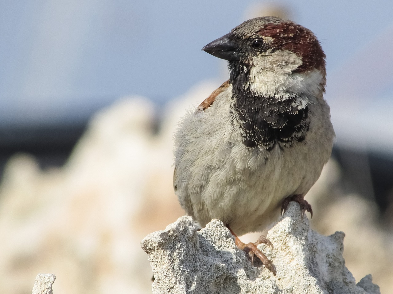 FREE sparrow Stock Photos from PikWizard