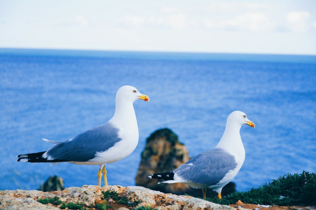 Albatross Seabird Aquatic bird