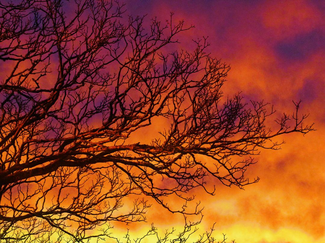 Sunset Trees Clouds