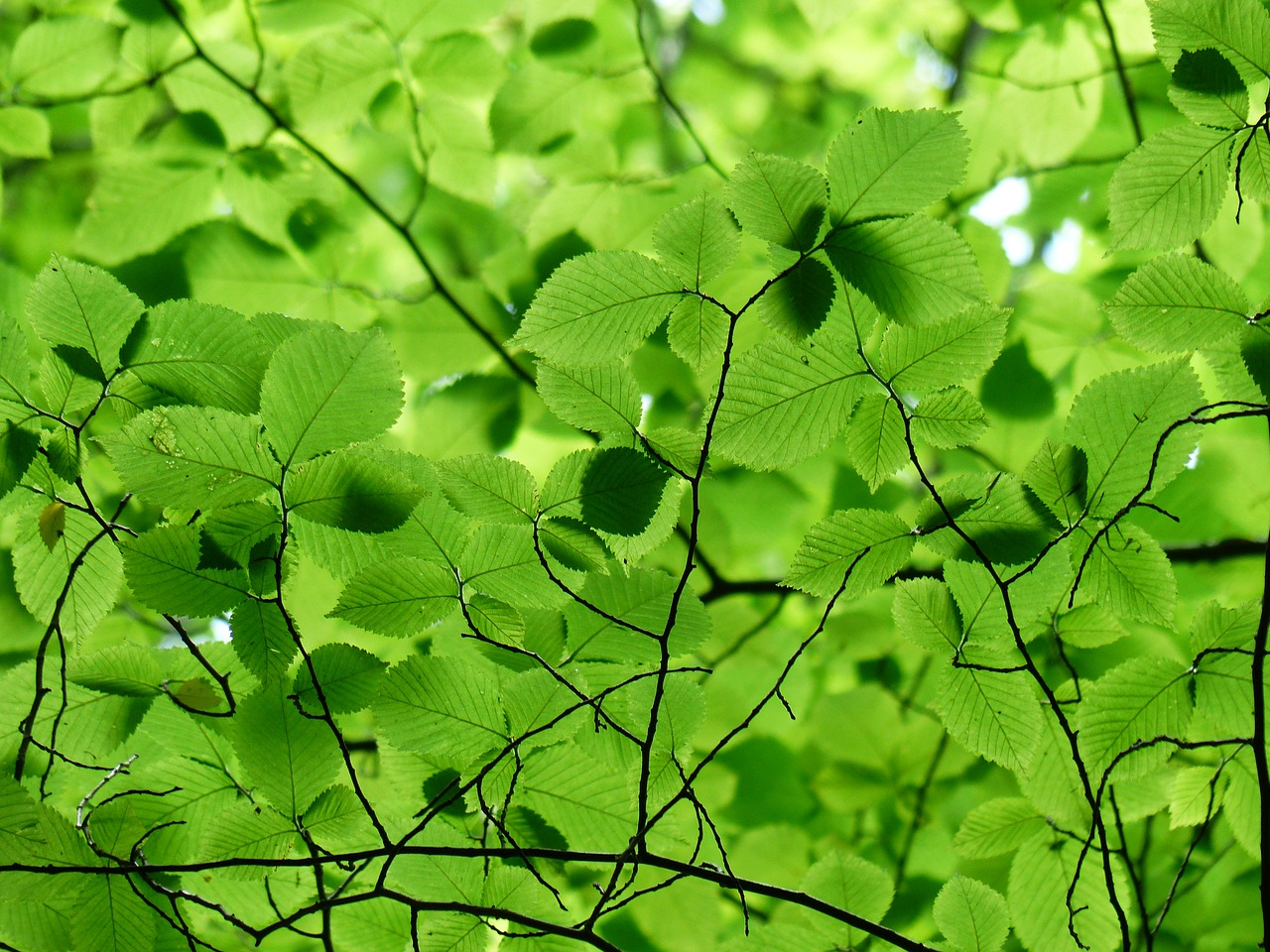 FREE leaf Stock Photos from PikWizard