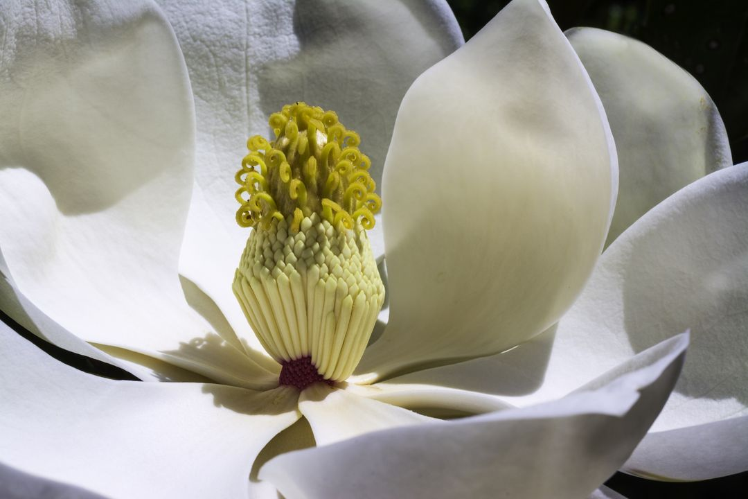 Flowers spring magnolia white flower
