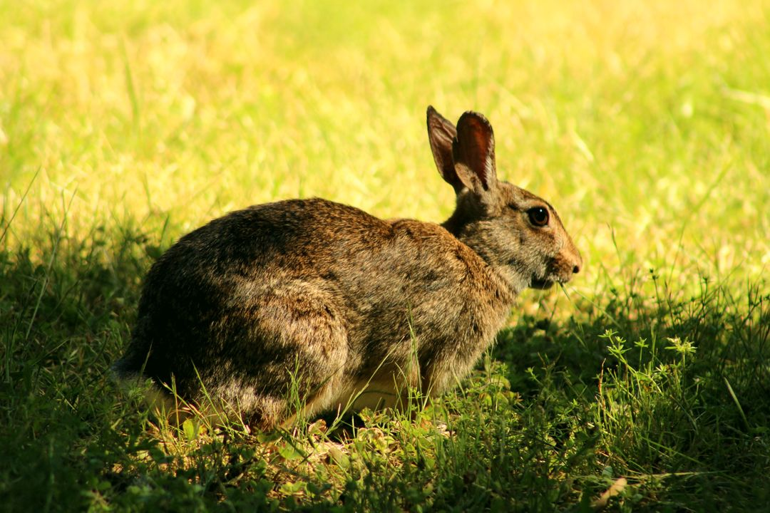 Hare Rabbit Mammal