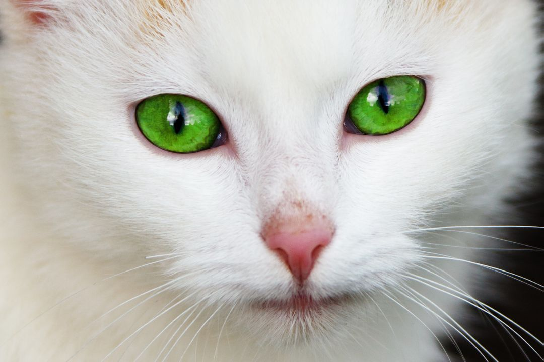 cat with green eyes Free Stock Images from PikWizard