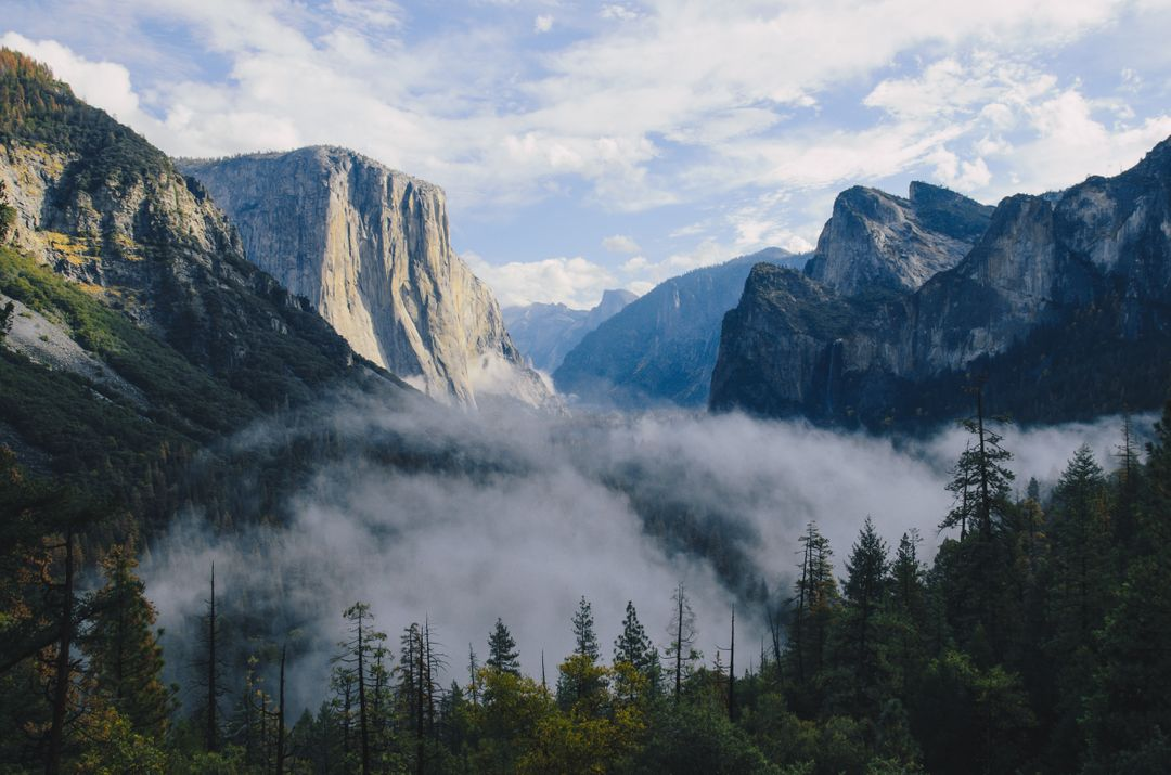 Image of a Misty Forest and Mountains