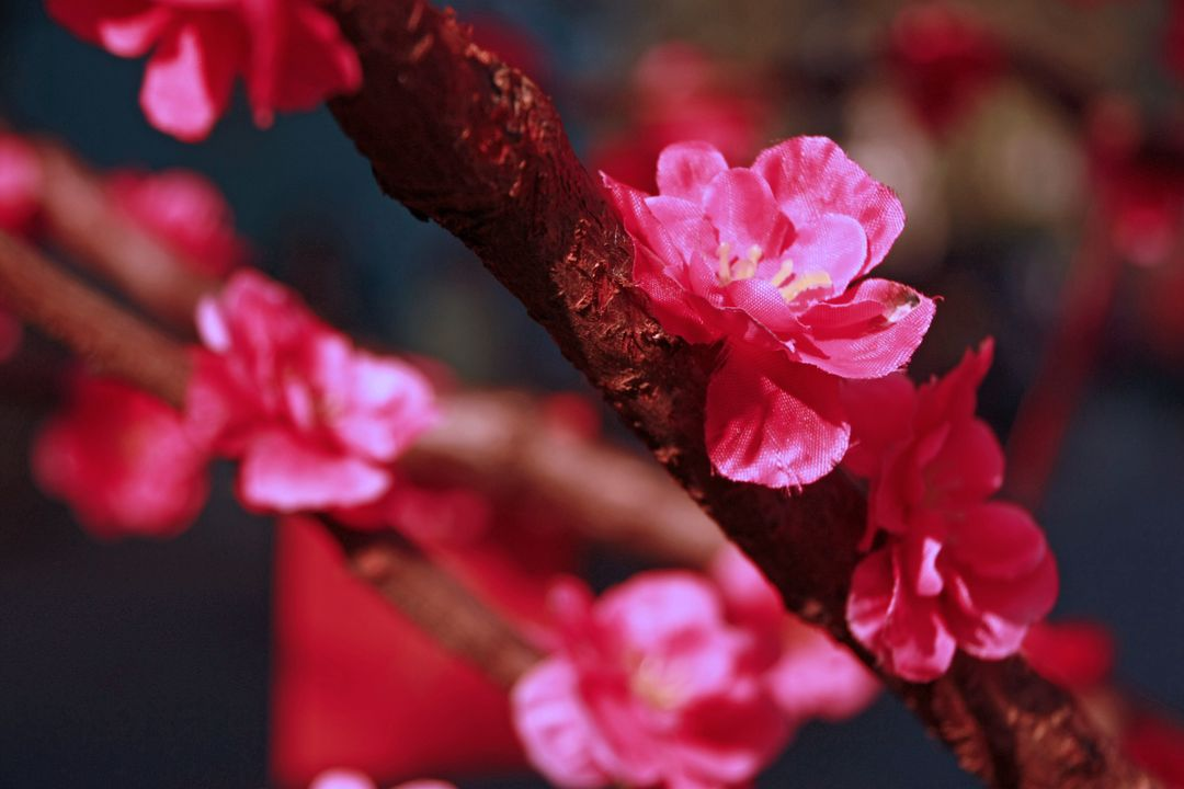Image of pink saturated flowers on branch