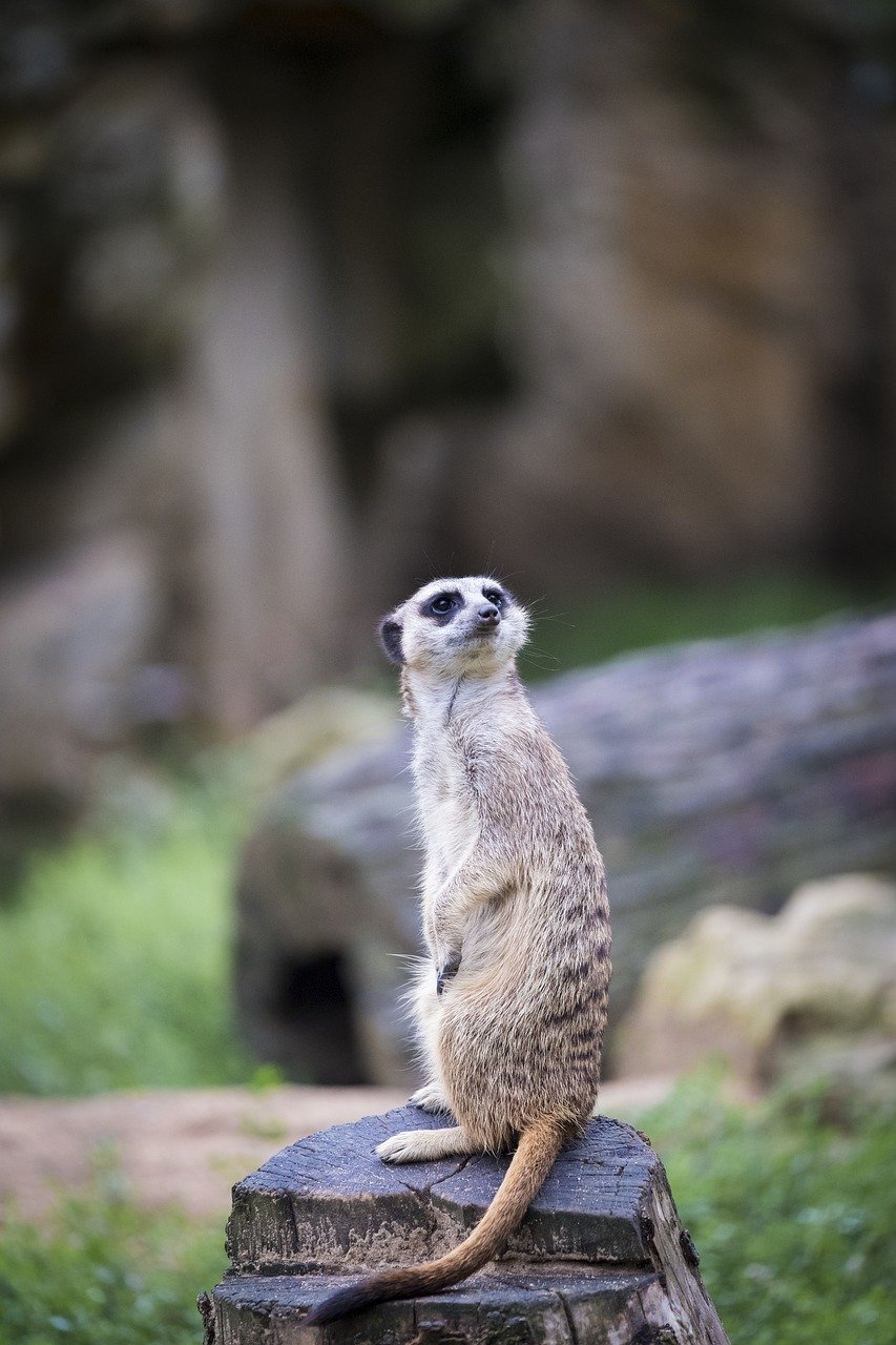 FREE mammal Stock Photos from PikWizard