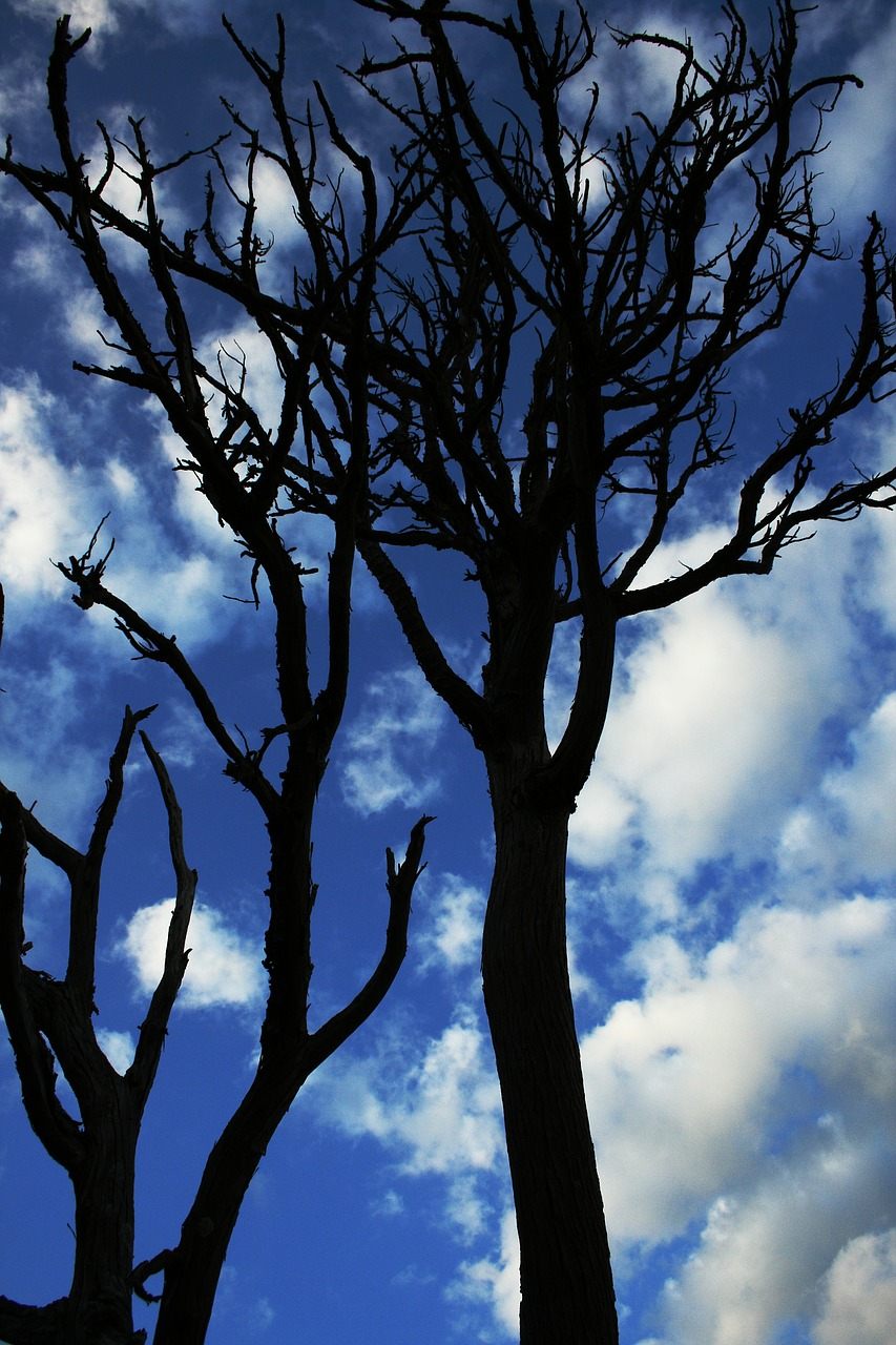 FREE branchlet Stock Photos from PikWizard