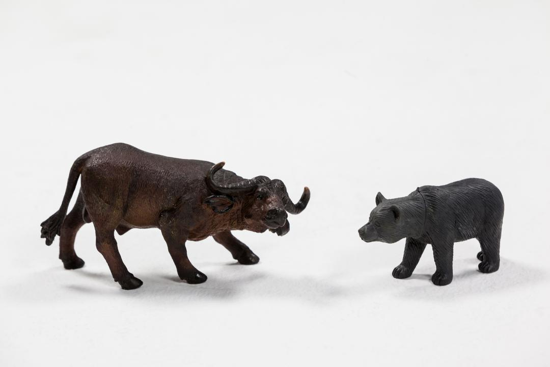 Miniature bear and charging buffalo