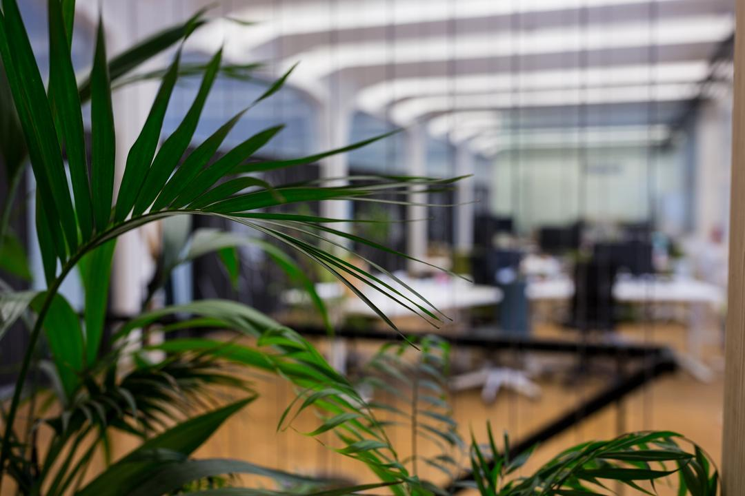 Close-up of pot plants in office