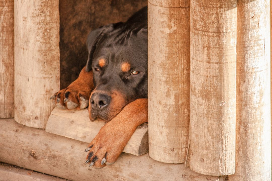 Dog dog house pet rottweiler
