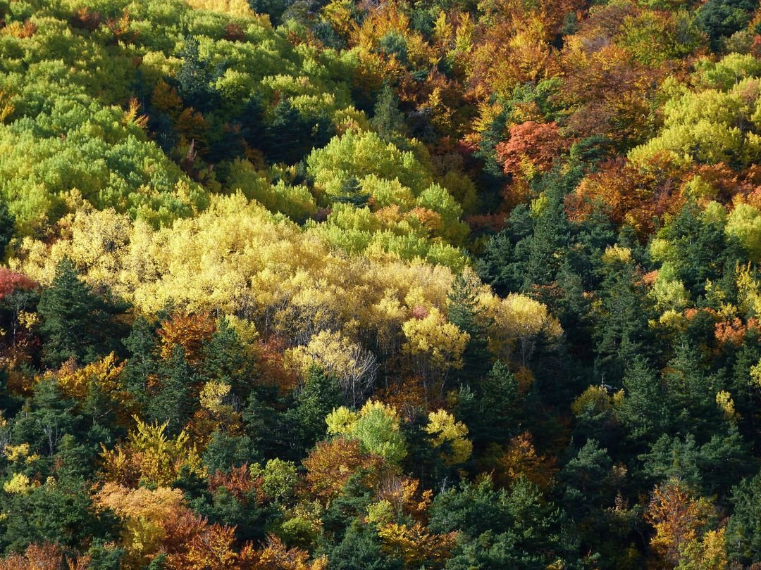 Colorful fall foliage forest