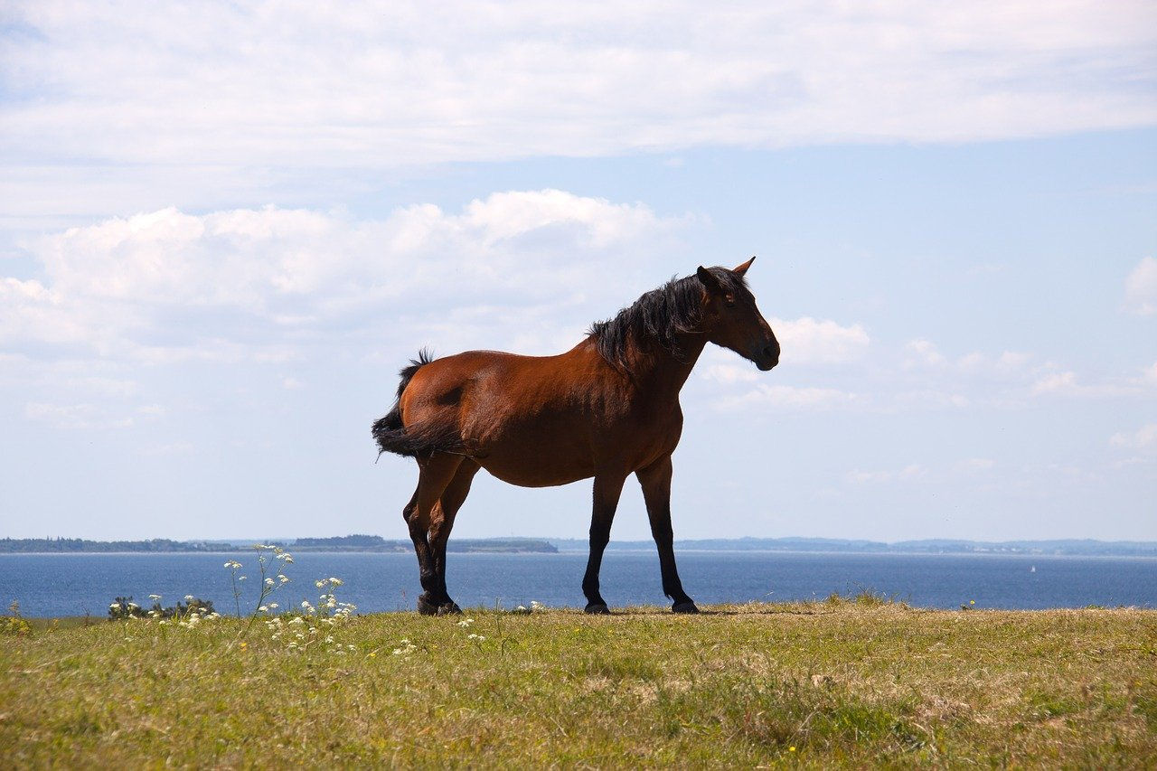 FREE horse Stock Photos from PikWizard