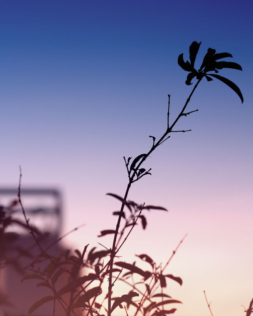 Plant during Sunset Time