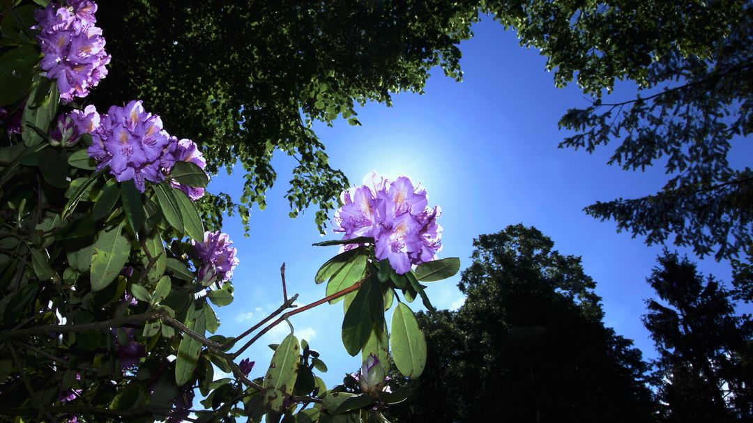 Worm's Eye View of Flowers Beside Trees Under the Sky during Daytime