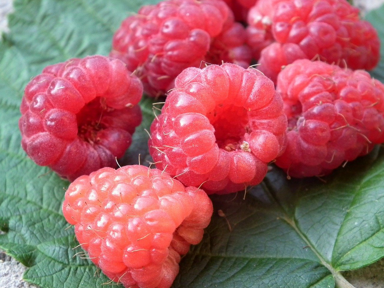 FREE raspberry Stock Photos from PikWizard