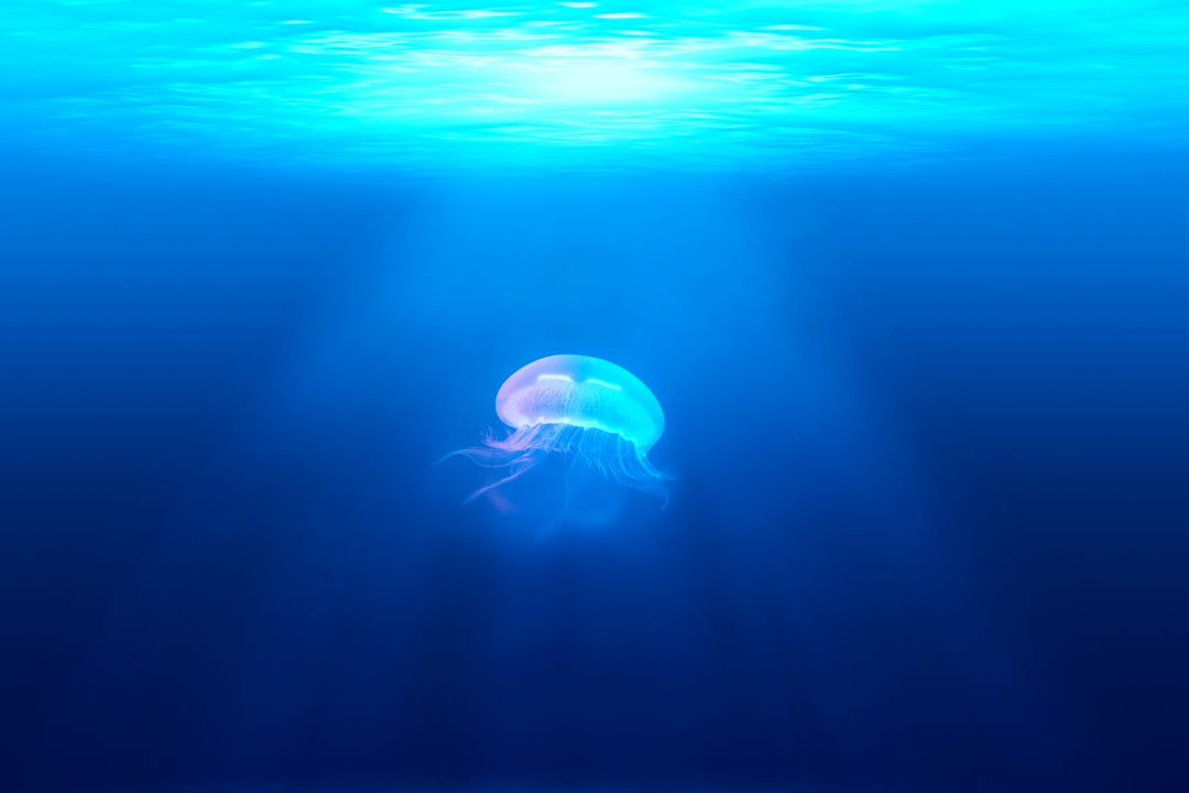 Jellyfish Invertebrate Light