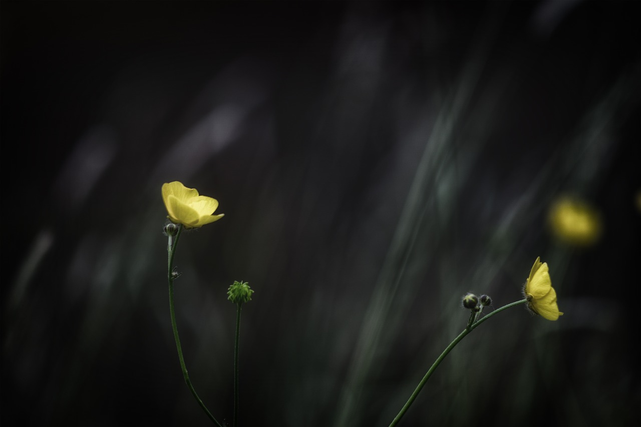 FREE buttercup image