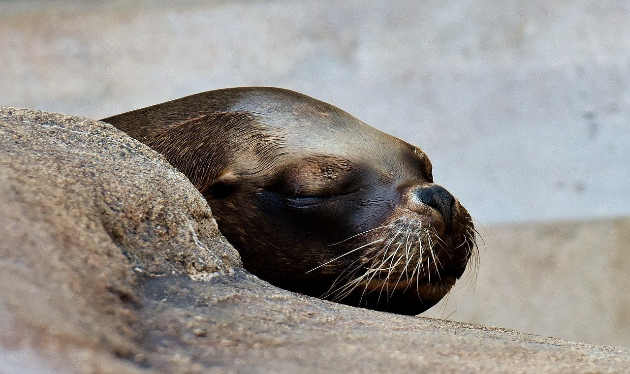 FREE seal Stock Photos from PikWizard