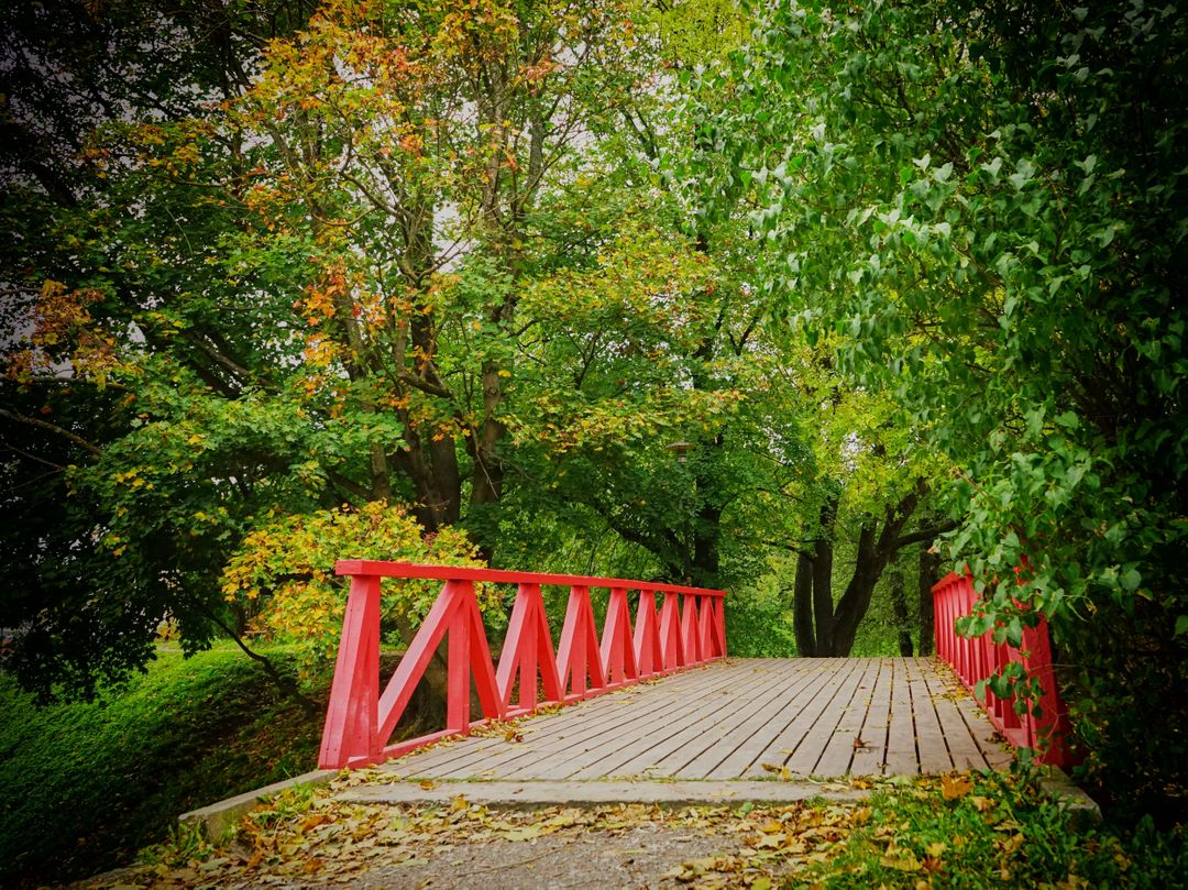 Bridge fall trees wood