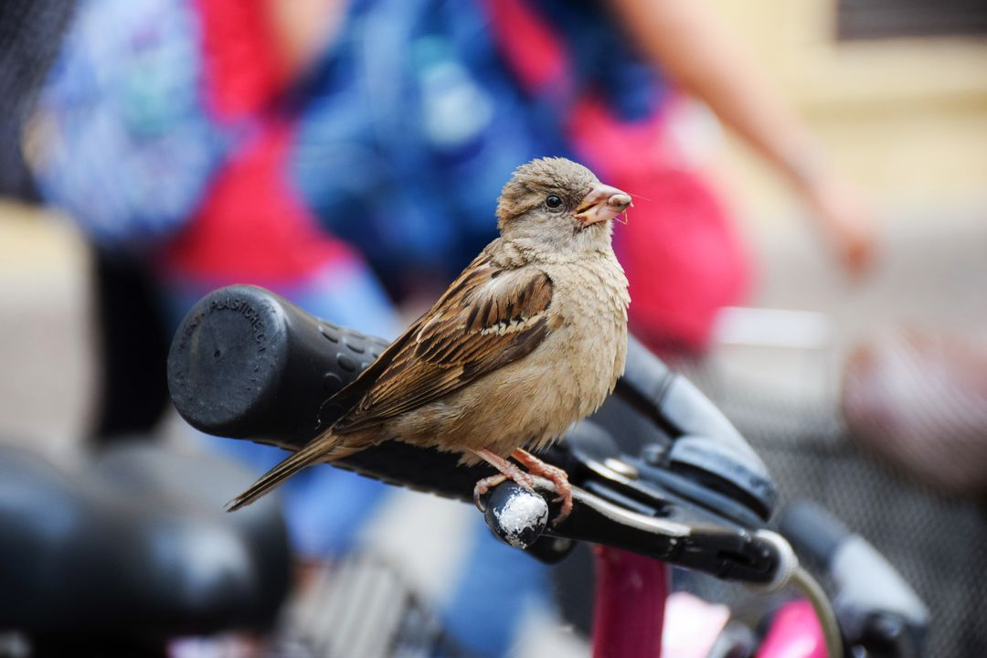 Bike sparrow city challenge