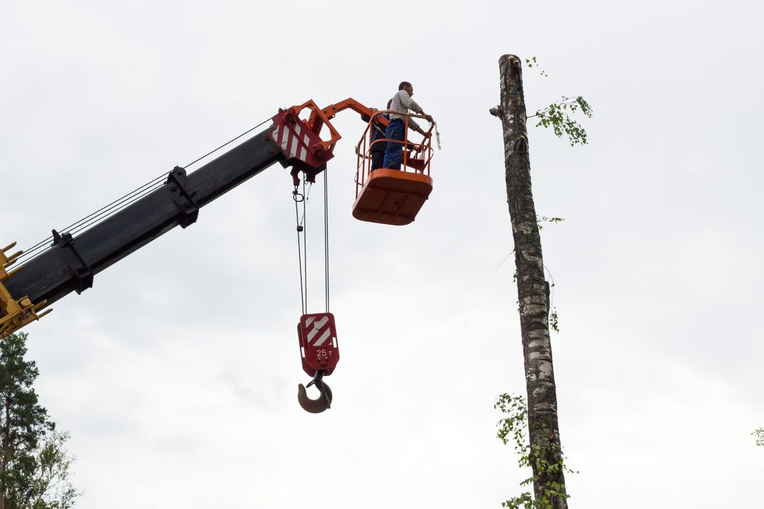 Birch chainsaw crane drop