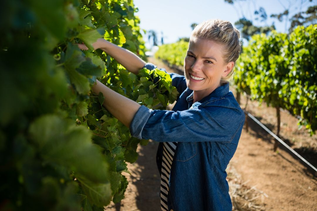 Portrait of female vintner examining grapes in vineyard Free Stock Images from PikWizard