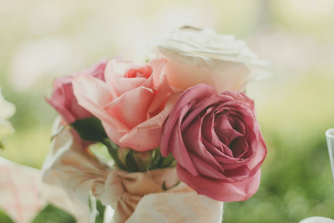 Red Rose Pink Rose and White Rose in Close Up Photo