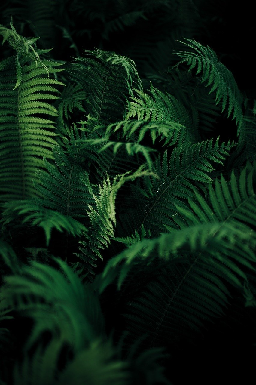 FREE fern Stock Photos from PikWizard