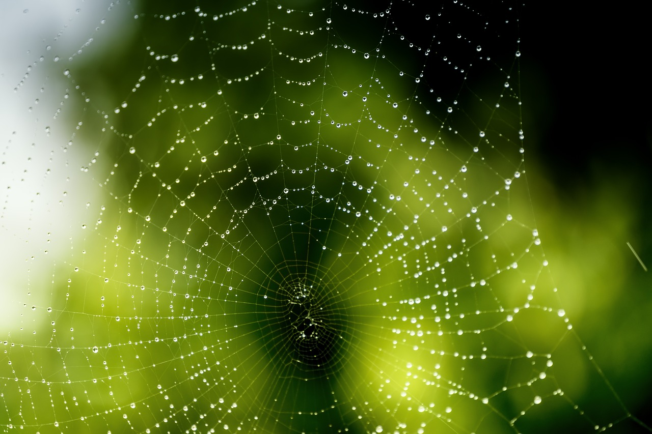FREE spider web Stock Photos from PikWizard