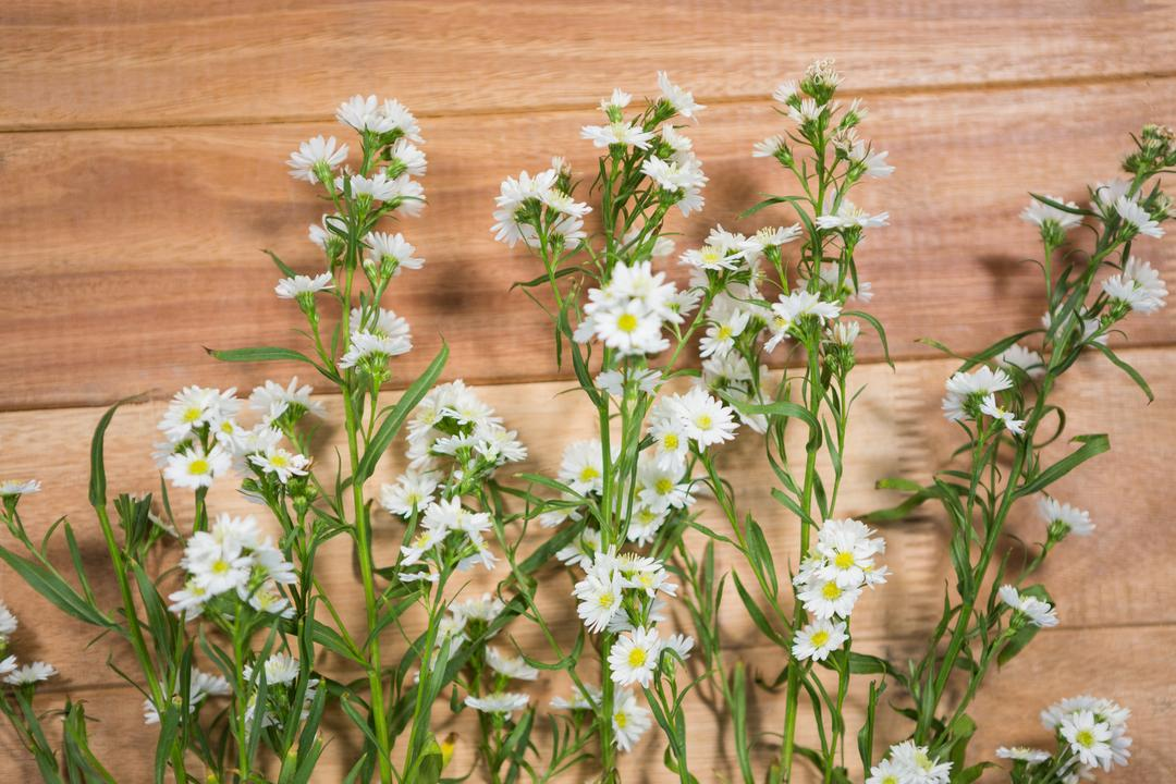 Fresh white flowers arranged on wooden board Free Stock Images from PikWizard