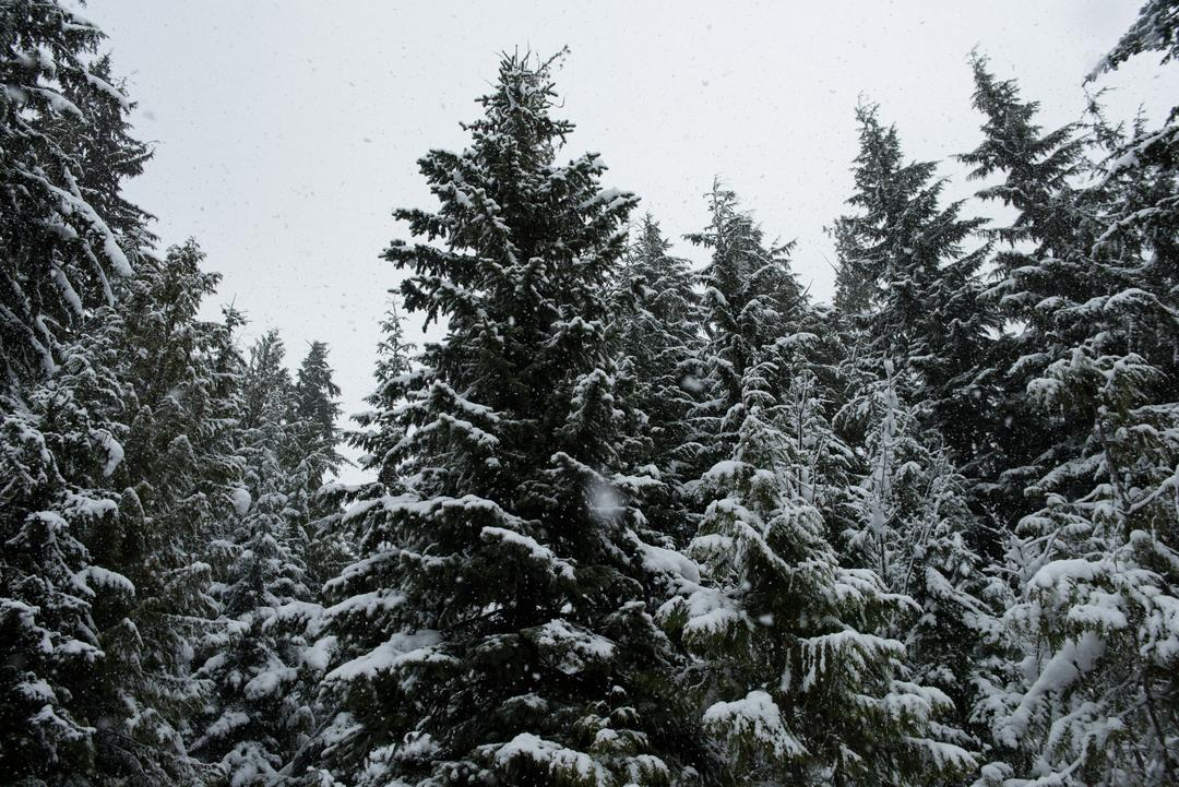 Snow covered trees on beautiful snowy day