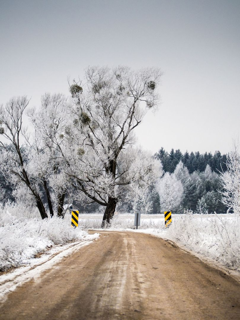 Winter dirt road