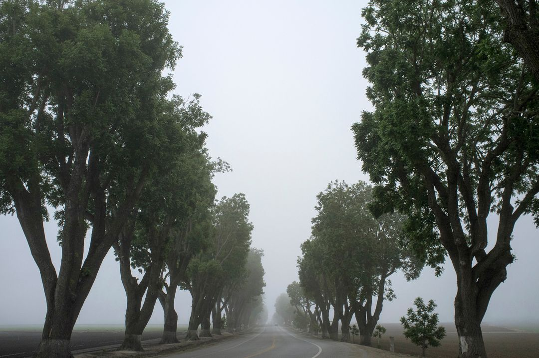 Grey fog trees